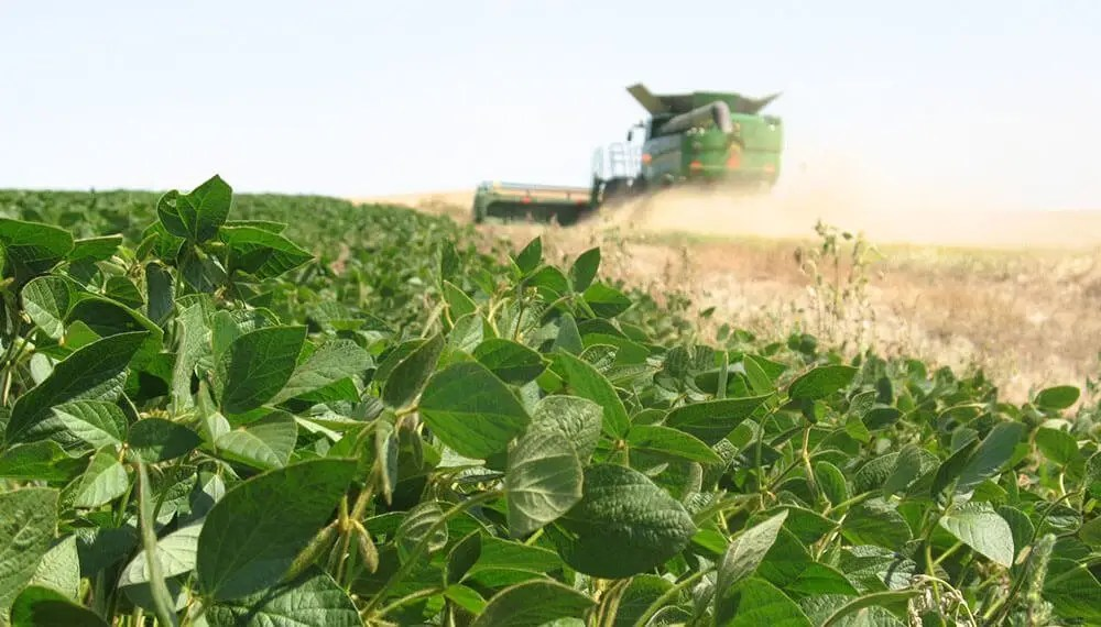 Cultivo de Soya en auge