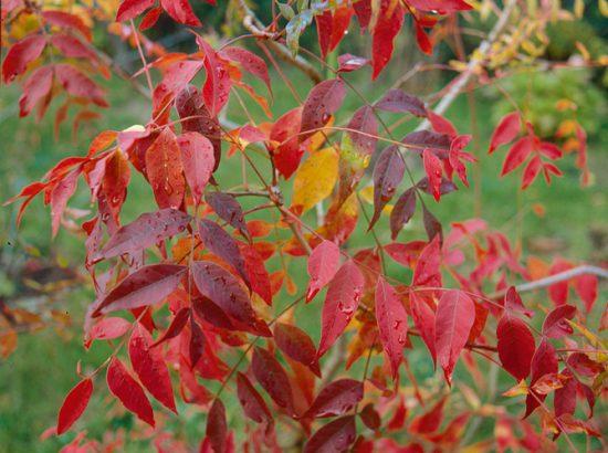 les arbres a admirer en automne