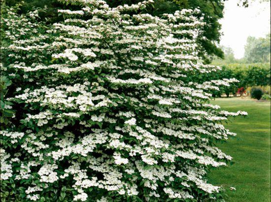 des arbres et des arbustes originaux