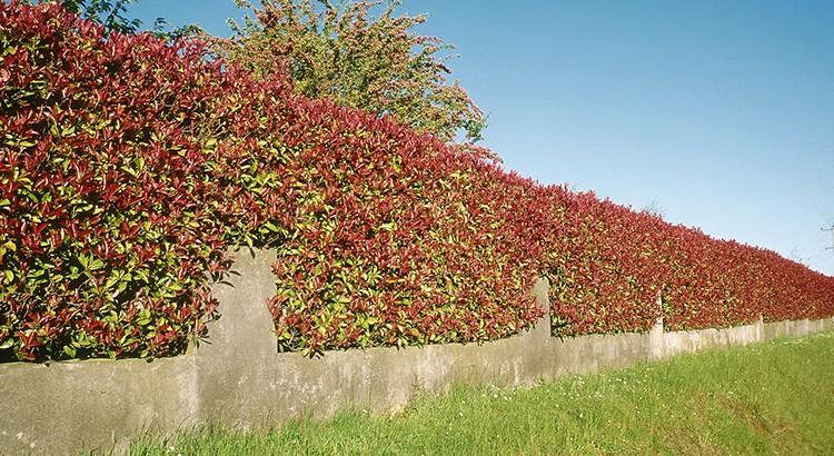 21 plantes brise vue qui vont