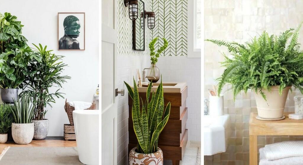 Plantes D Interieur 15 Varietes Pour La Salle De Bains