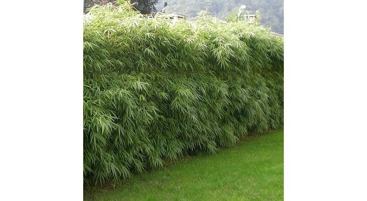 10 facons de se calfeutrer avec le bambou