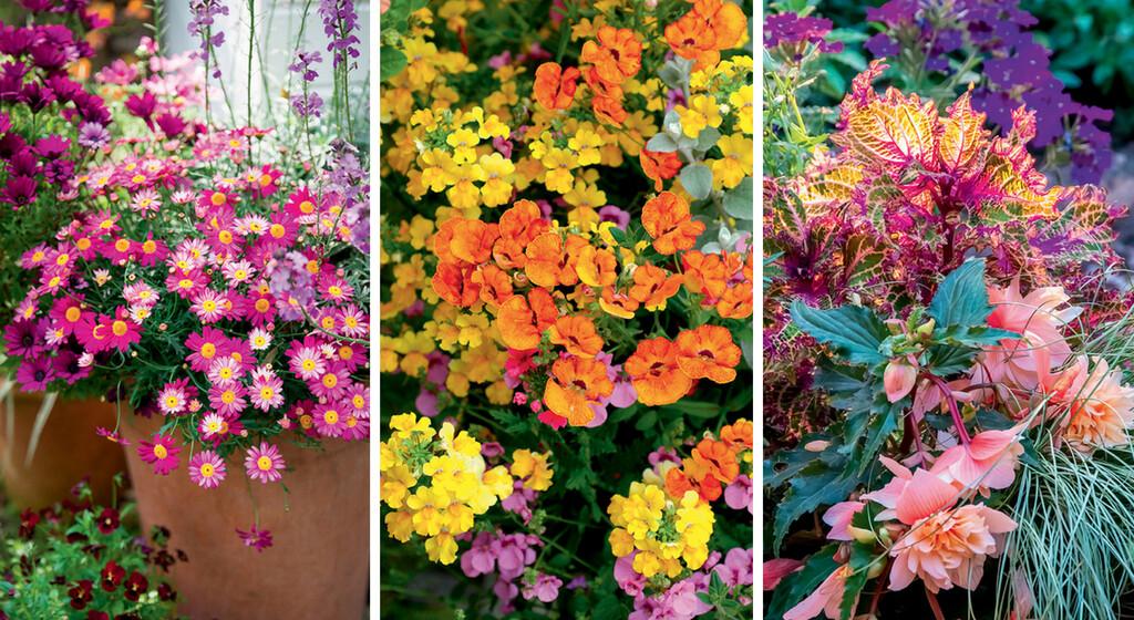 26 fleurs pour un decor estival