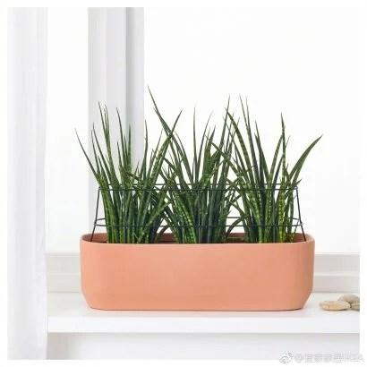 cache pots originaux pour faire fleurir