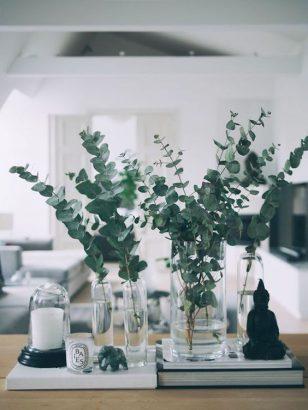 eucalyptus 35 facon de l utiliser