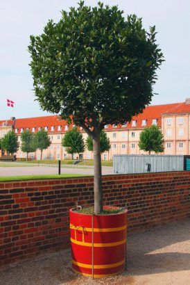 jardin 4 arbres qui se plaisent en pot