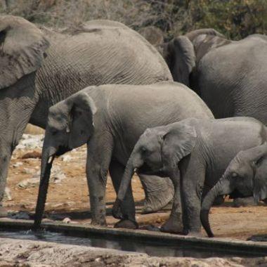 Etosha elephants15 namibia