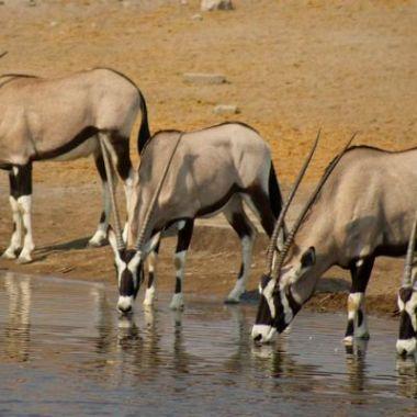 Etosha water hole oryx namibia