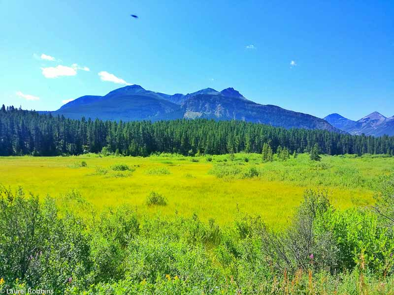 Castle Wilderness is home to 59 species of mammals. It's a fantastic place for wildlife viewing in Alberta.