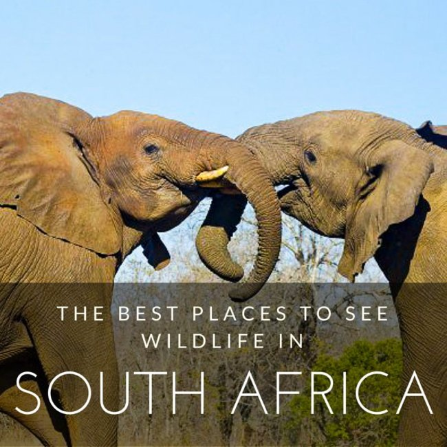 best places to visit in South Africa for wildlife
