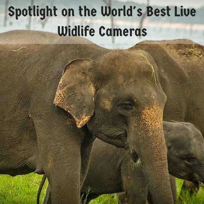 Spotlight On The World's Best Live Wildlife Cameras