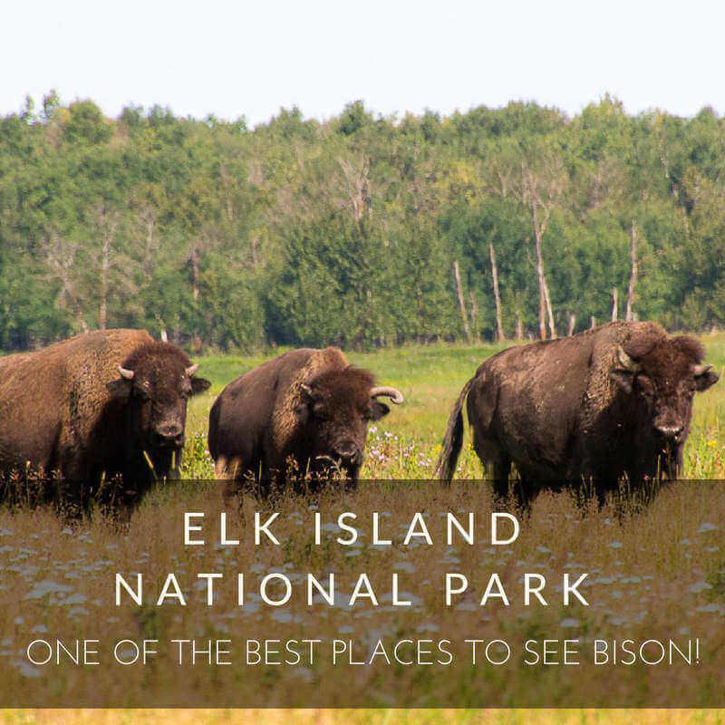 rsz_elk_island_national_park_sq