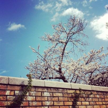 cloud sakura