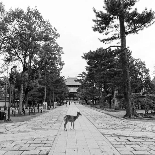 鹿と東大寺