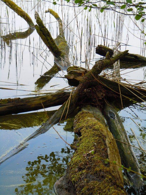 Baumstamm im See