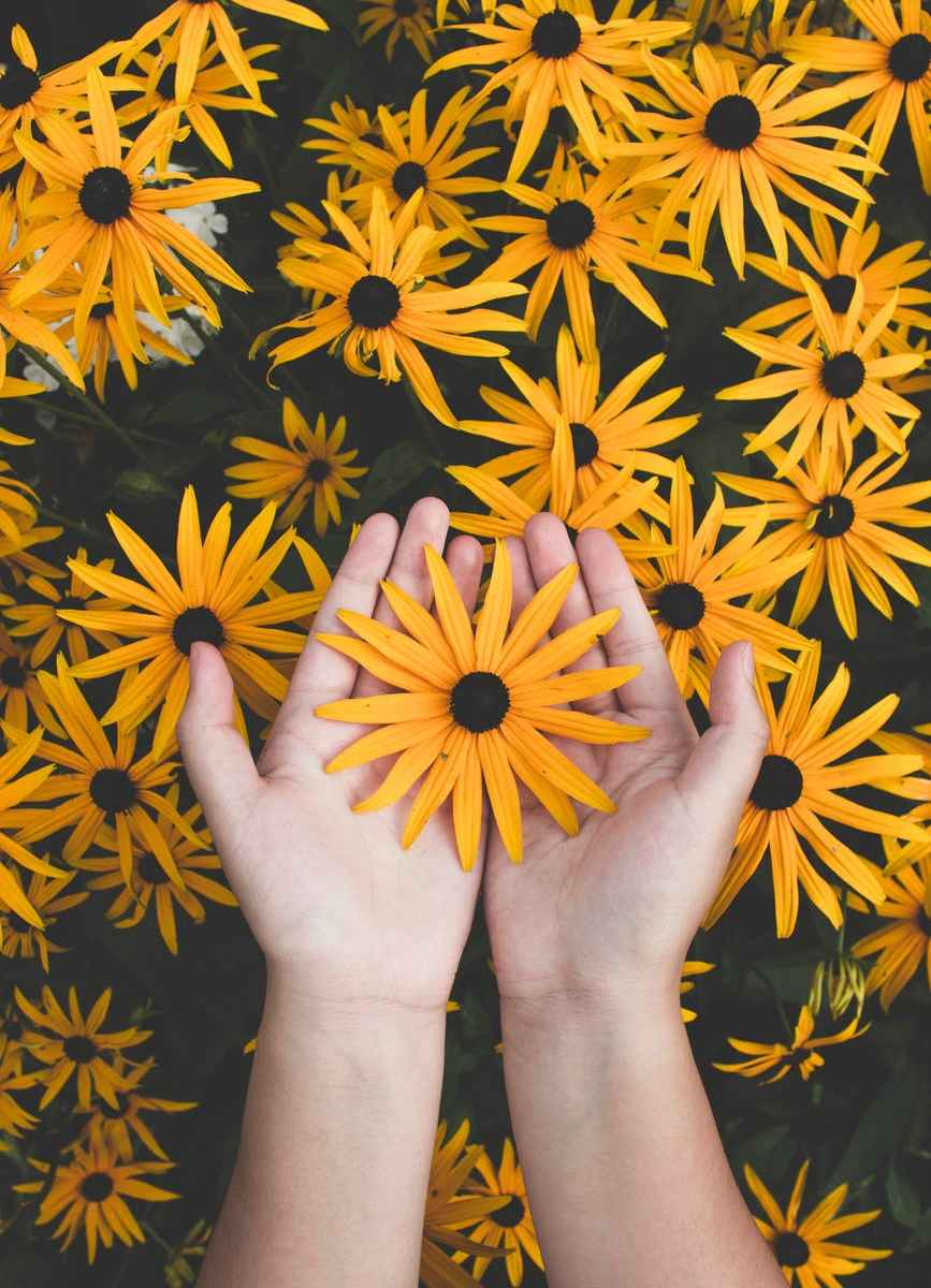person holding yellow black eyed susan flowers in bloom