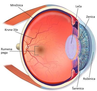 Zgradba očesa