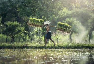 agriculture 1822530 640 - Doar în Thailanda