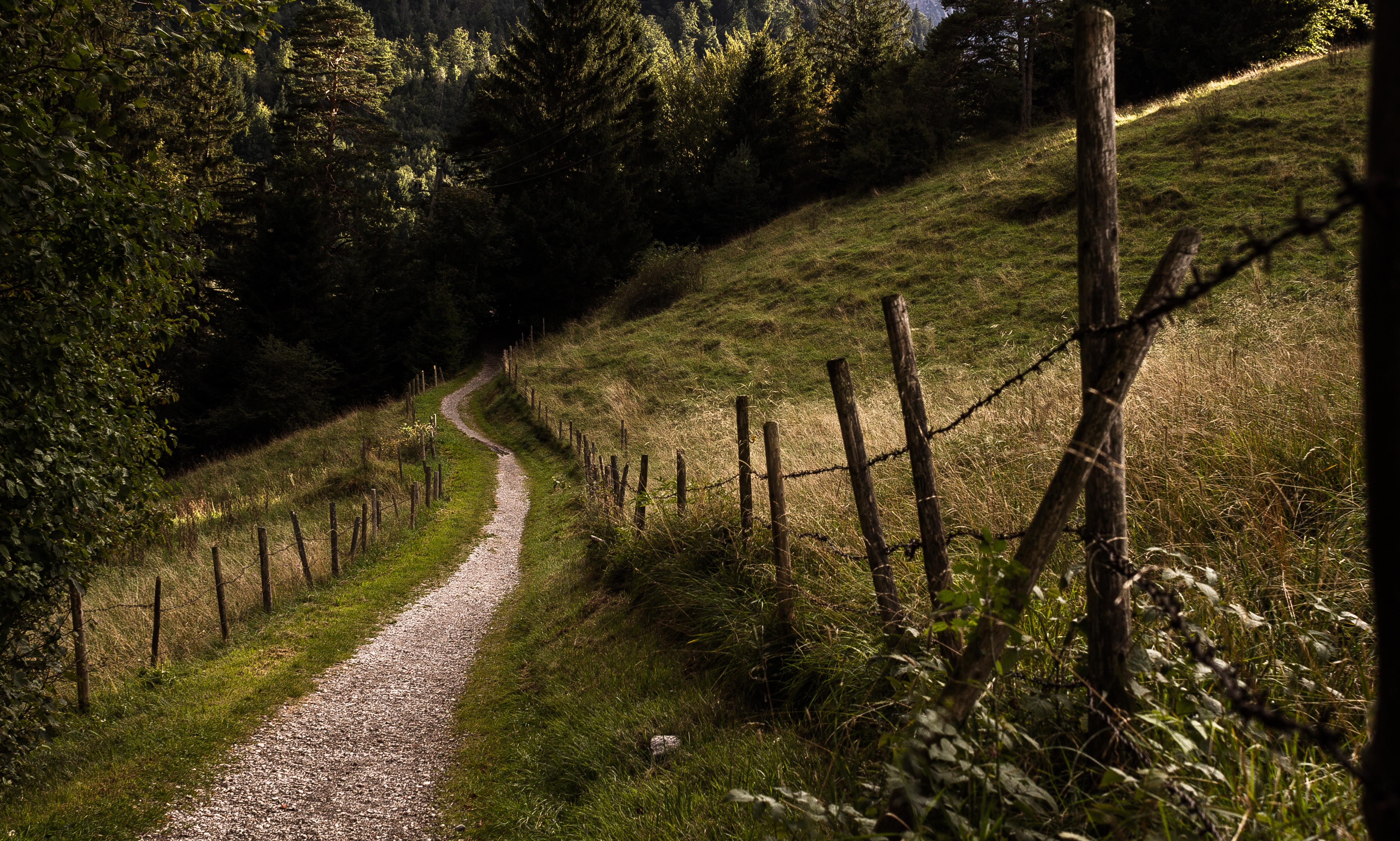 image of a winding path leading into the woods