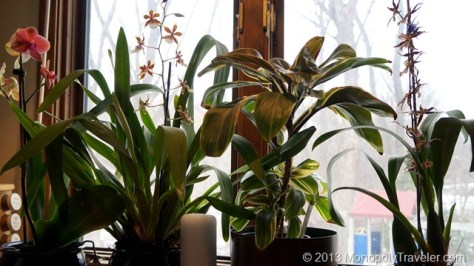 Orchids - One of My Hobbies