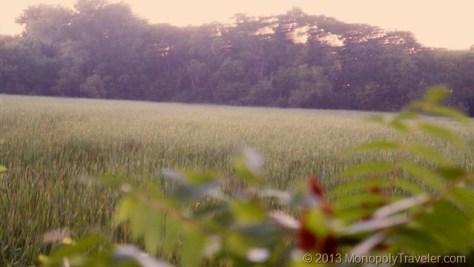 Blurred Evening Photo