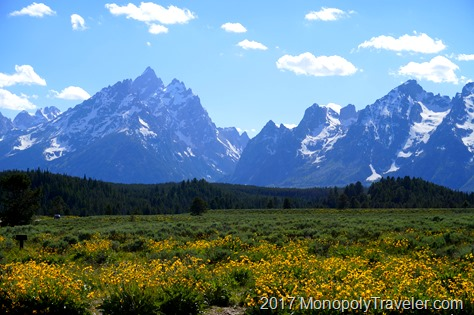 Many wildflowers blooming near the tall mountains