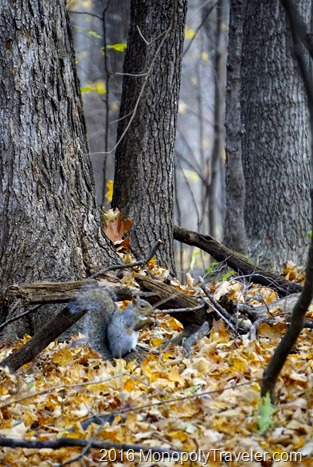 A squirrel enjoying a snack on the forest floor covered with freshly fallen leaves
