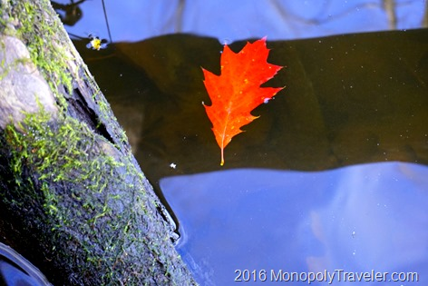 A single red and orange oak leaf floating away