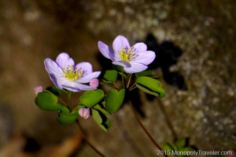 More Ephemeral Flowers