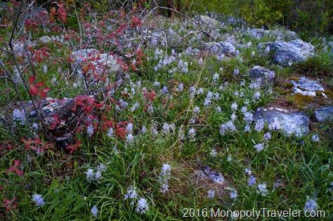 Spring flowers blooming in abundance