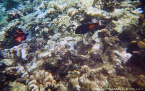 Using a disposable underwater camera