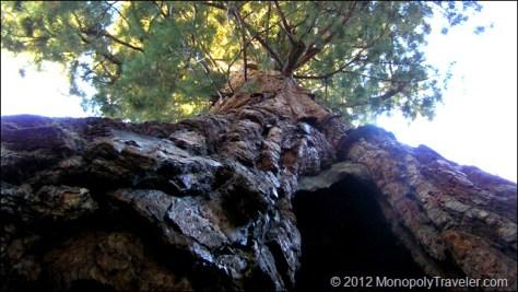 Giants of Yosemite