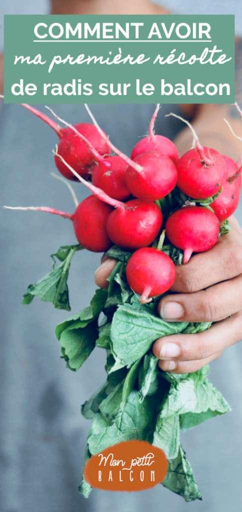 conseils pour faire pousser radis bio sur un balcon en pot et jardinière