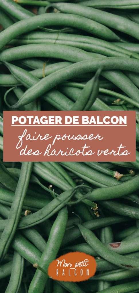cultiver des haricots verts sur un balcon