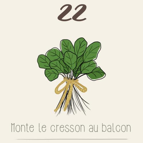 Cresson au balcon (semis, culture, récolte)