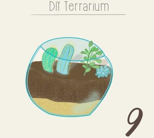 DIY : réaliser un petit terrarium succulentes et cactus