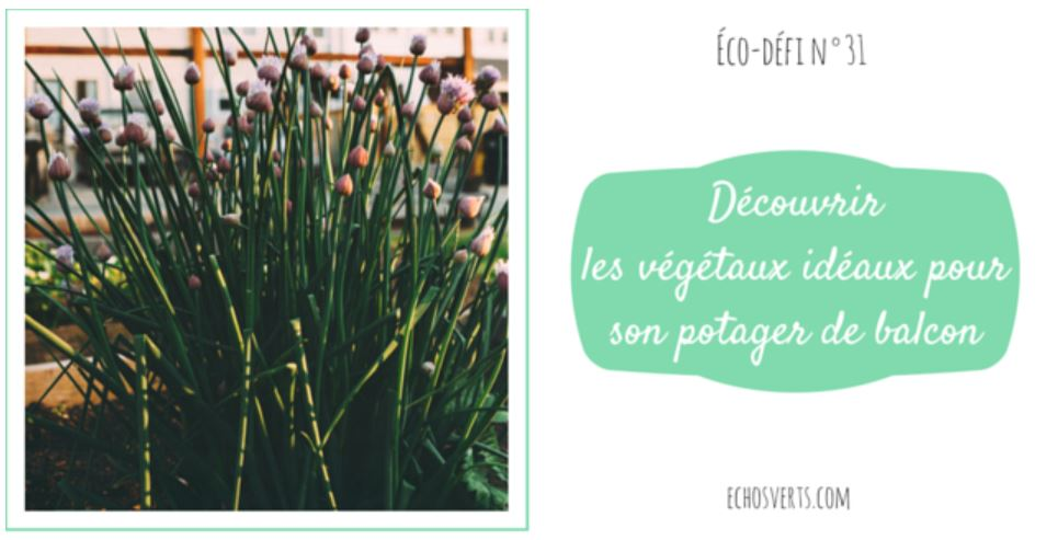 inscription à l'éco-défi découvrir les plantes facile à cultiver dans potager sur balcon