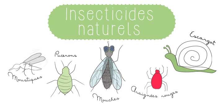 Fabriquer ses insecticides maison et naturel (pucerons, moucherons, fourmi)