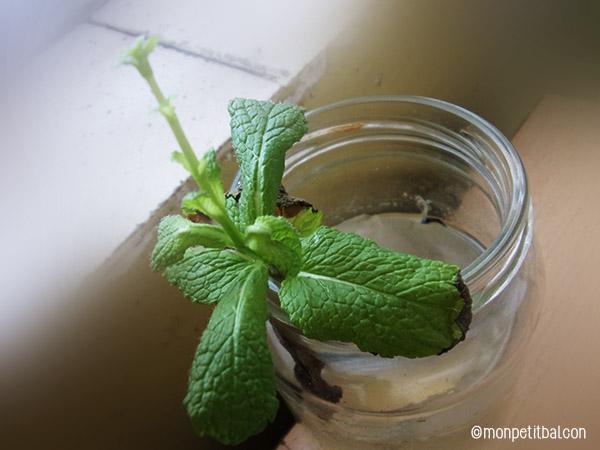 un jardin aromatique dans la cuisine végétale et gourmande