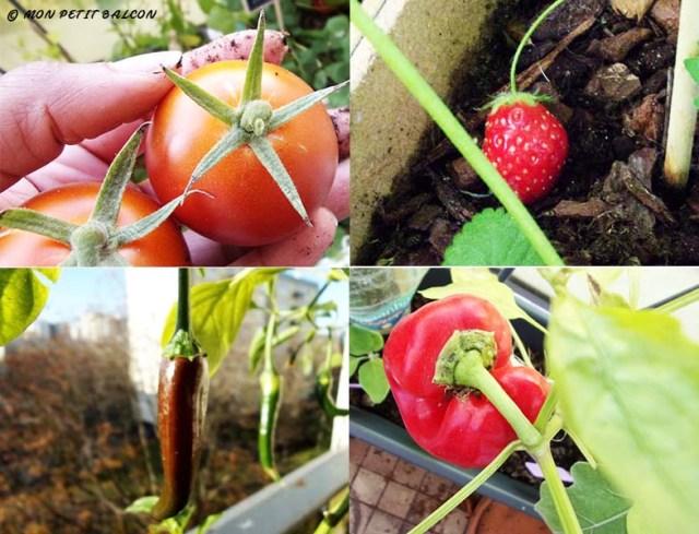 le choix des plantes à cultiver dans un potager sur balcon : légumes fruits et fruits