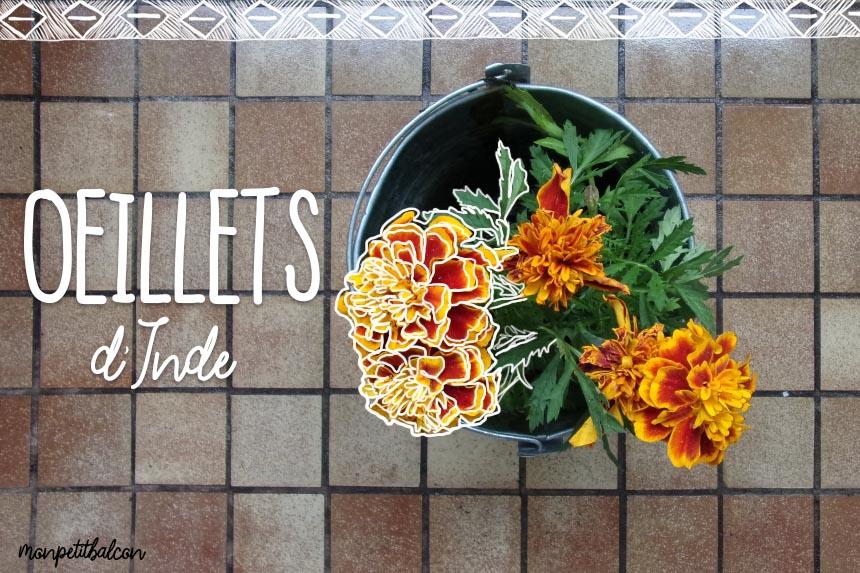 Oeillets d'Inde au balcon (semis, culture, récolte)