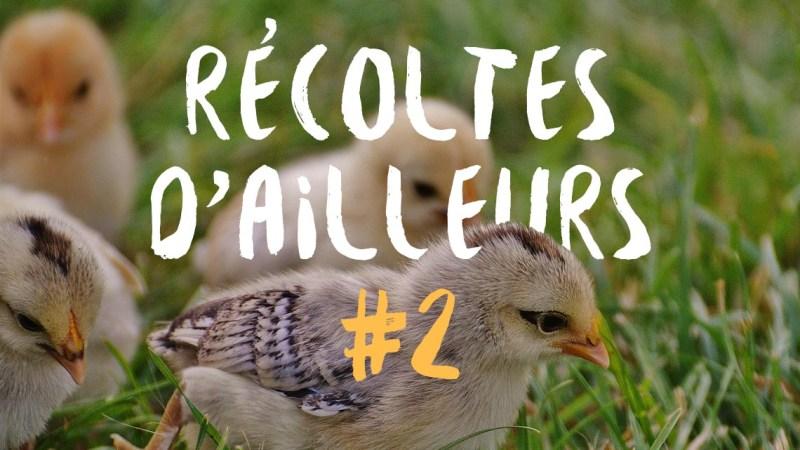 Récoltes d'ailleurs #2 : animaux à plumes et à poils