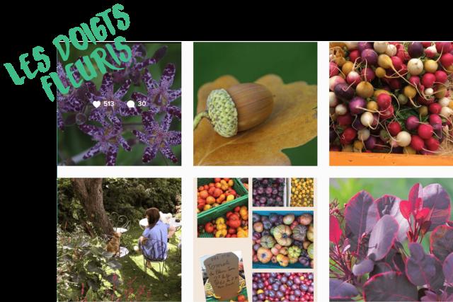 10 comptes Instagram pour voir la vie en vert en 2017 les doigts fleuris