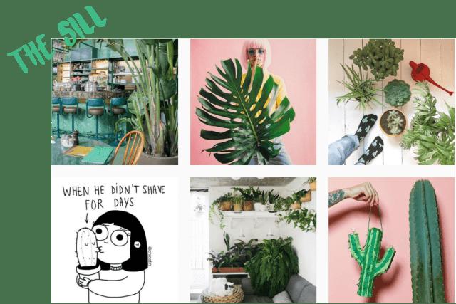 10 comptes Instagram pour voir la vie en vert en 2017 the sill