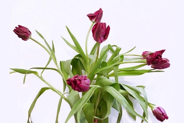bouquet de tulipe ile-de-france boutique pompom montreuil