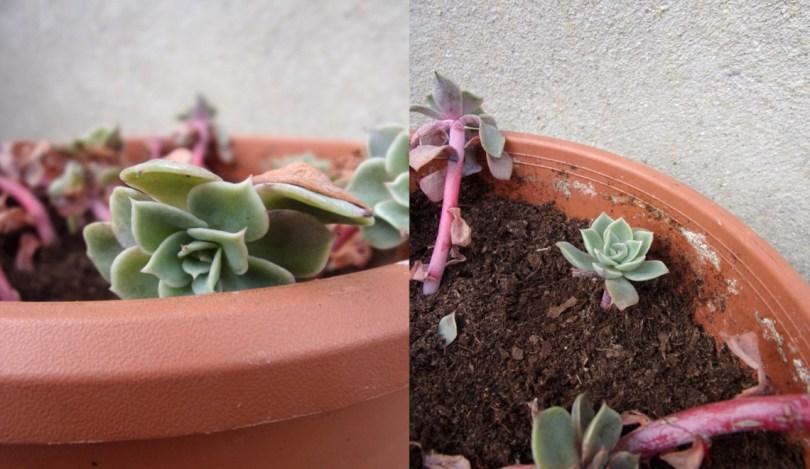Plantes succulents en fleurs dans une jardinière dans le jardin | Mon petit balcon