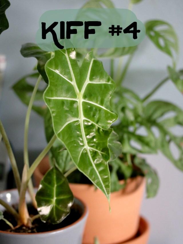 plante d'intérieur tropicale - alocasia amazonica