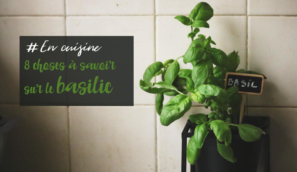 faire pousser du basilic grand vert en pot. herbe aromatique facile cultiver dans la cuisine dans un pot noir sostrene grene