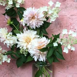 Comment entretenir et conserver un bouquet de dahlia