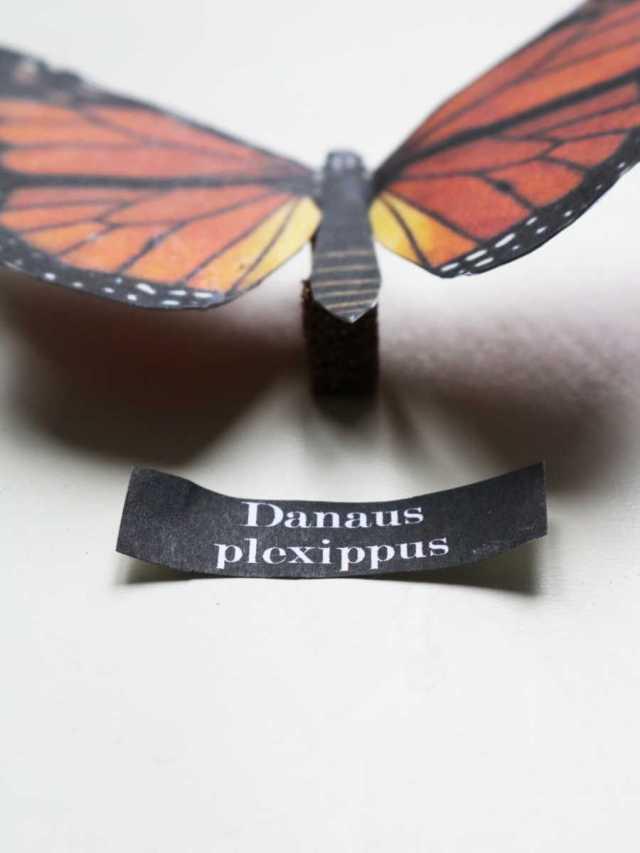 Danaus plexippus DIY cabinet de curiosités avec des papiers en papier pas à pas | Mon petit balcon